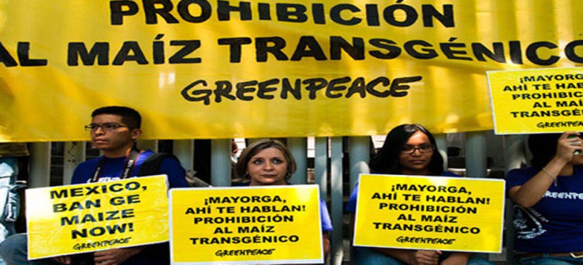 Greenpeace. Campaña internacional en defensa del maíz nativo mexicano
