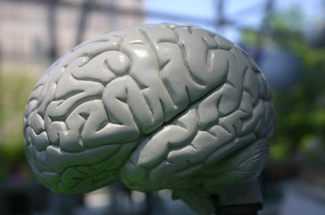 El desafío de descifrar el cerebro humano