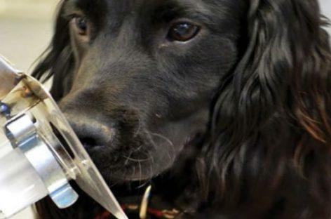 Los perros son los nuevos ángeles de la guarda contra el cáncer