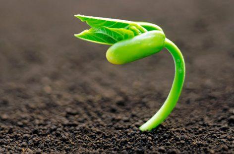 Semillas, un mundo de diversidad genética