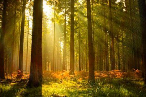 Salvar los bosques: nueva y revolucionaria tecnología de reforestación