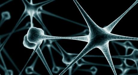 Viaje al centro del cerebro