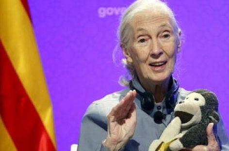 Jane Goodall ve en los jóvenes la esperanza para el cambio global
