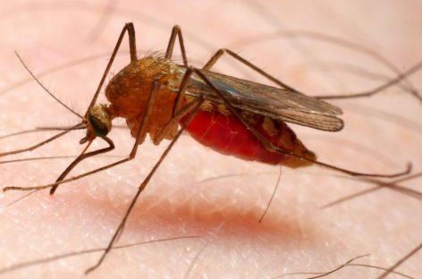 La Agencia Europea de Medicamentos autoriza la primera vacuna contra la malaria