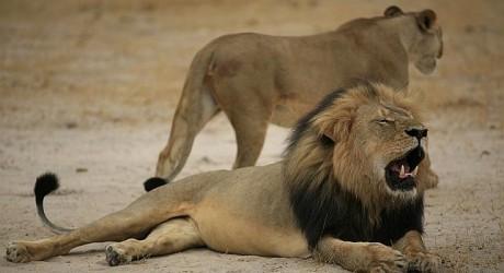 Cecil, el caso del cazador cazado