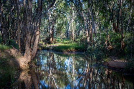 Activistas y grandes bancos en Australia forman alianza para proteger medio ambiente