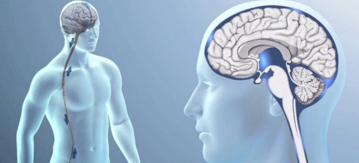 Científicos españoles usan una nueva para el diagnóstico precoz de tumores cerebrales