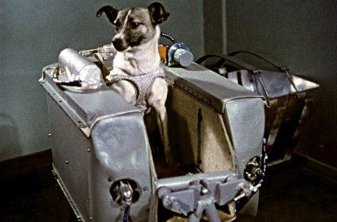 58 aniversario del primer ser vivo en el espacio: la perra Laika