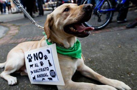 Colombia penará con hasta 3 años de cárcel el maltrato animal