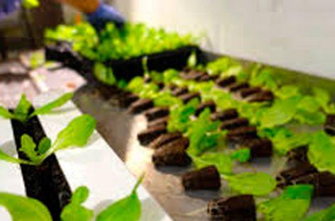 La nueva agricultura se une a los entornos urbanos