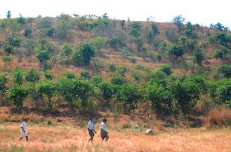Fundación Vicente Ferrer. Árboles que salvan la tierra árida