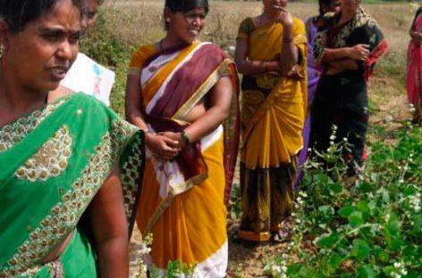 FVF. Mujeres que se empoderan a través de la agricultura
