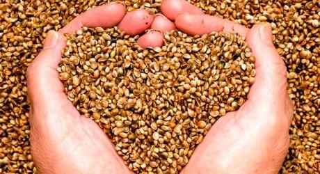Las semillas como clave para el futuro alimentario