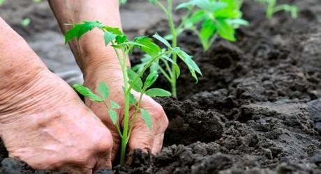 Agricultura sostenible para luchar contra el cambio climático