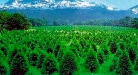 La reforestación de bosques, el pulmón del planeta