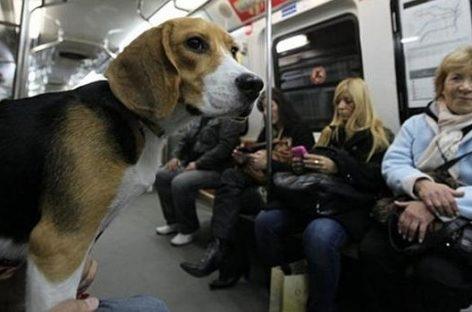 Madrid ya permite a los perros viajar en metro