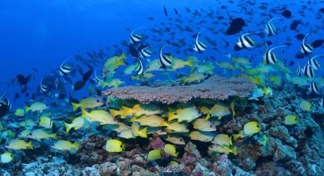Obama crea en Hawái la región protegida más grande del mundo