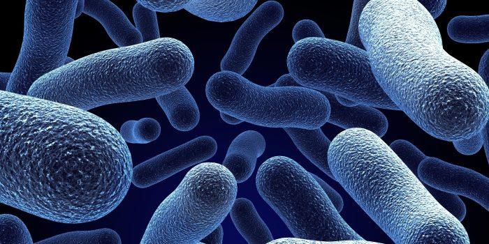 Descubren la bacteria que puede alargar la vida