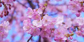 Ikigai: el secreto de los japoneses para vivir más tiempo y más felices