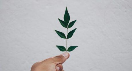 Futuro vegetal