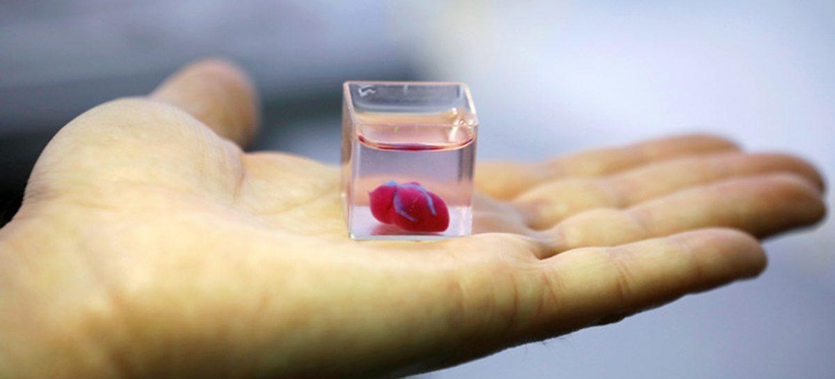Un grupo de investigadores de la Universidad de Tel Aviv han creado un corazón que palpita