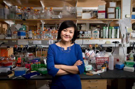 La científica Li-Huei Tsai avanza un tratamiento no invasivo para acabar con el Alzheimer