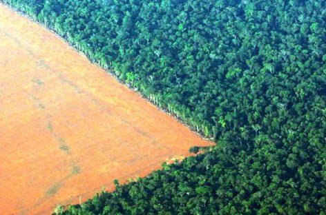 Obligar al Gobierno brasileño a respetar el medio ambiente