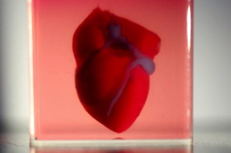 La revolución del trasplante de órganos: el primer corazón creado en impresora 3D