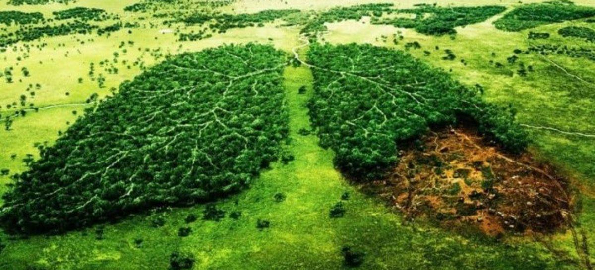 Un trillón de árboles para combatir el calentamiento global