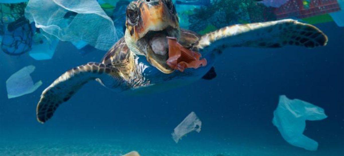 Salvar los océanos: un método para extraer microplásticos del agua