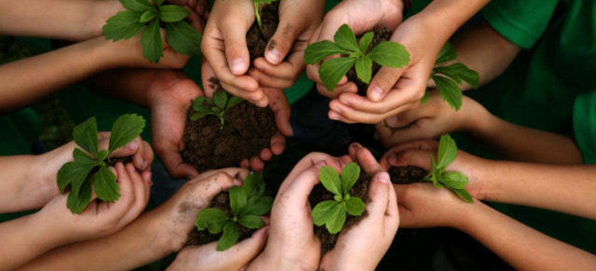 12 soluciones cotidianas para salvar el planeta